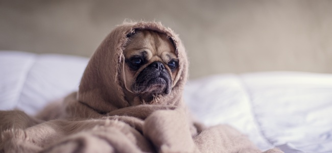 How Pet Owners Should Maintain Their HVAC Systems